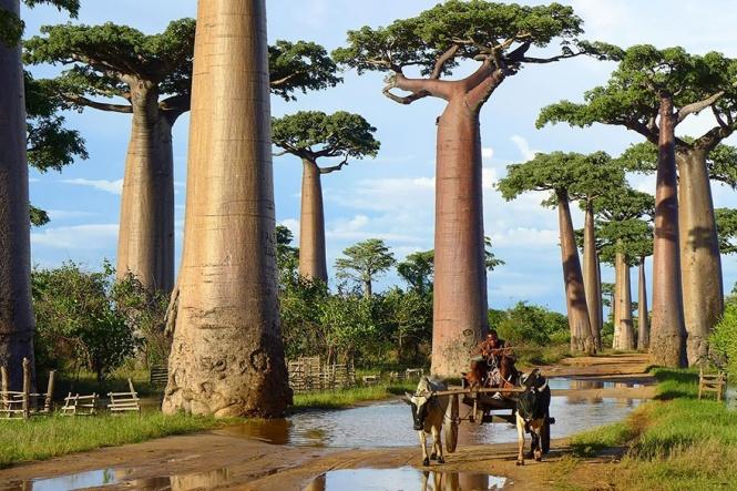 Los 16 árboles más espectaculares del mundo